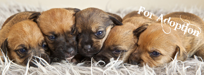 For Adoption – Poppetts Pups | Christchurch Pet Photography