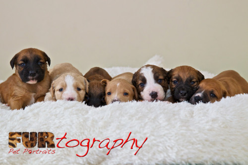 K9 Rescue Puppies