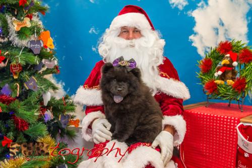 Kiwi Christmas 2014