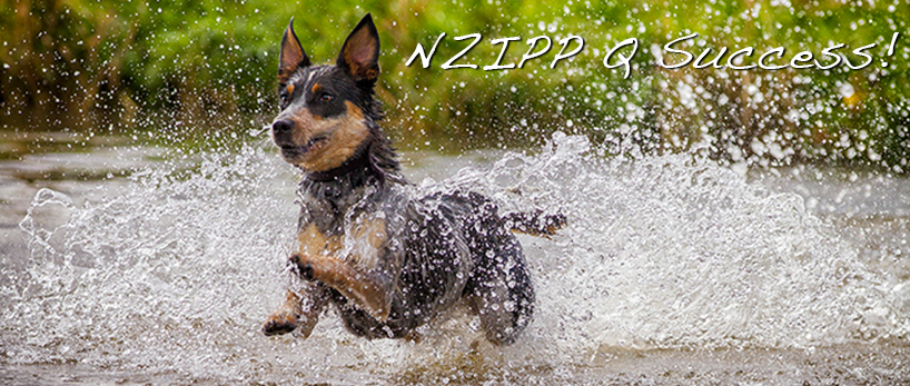 NZIPP Q Success! | Christchurch Pet Photographer
