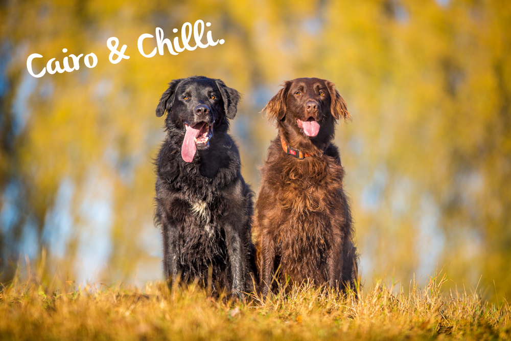 Cairo & Chilli | Christchurch Pet Photography
