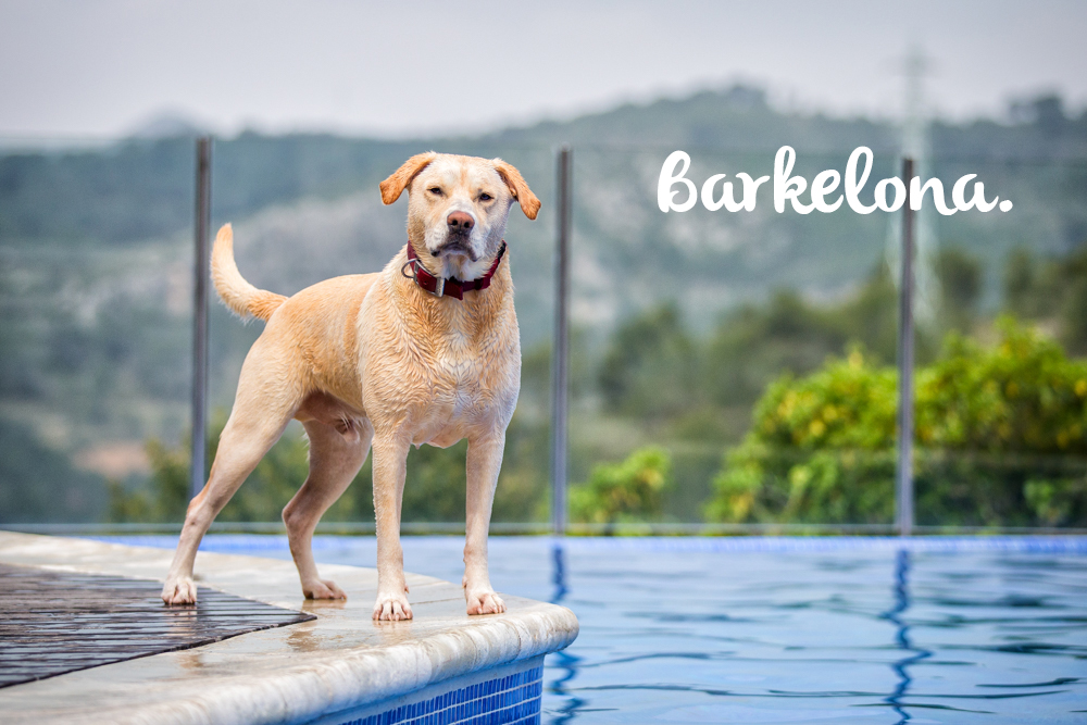 Barkelona: A Pet Photography Adventure