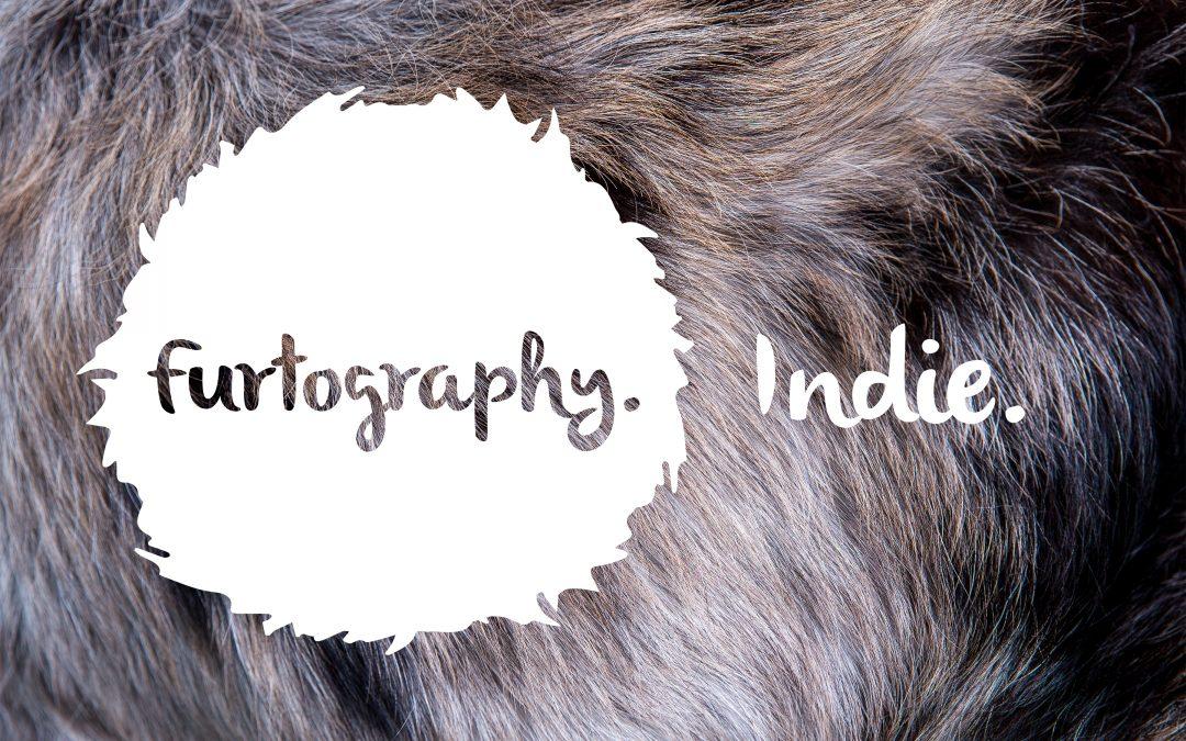Indie's Cake Smash Session   Studio Pet Photography