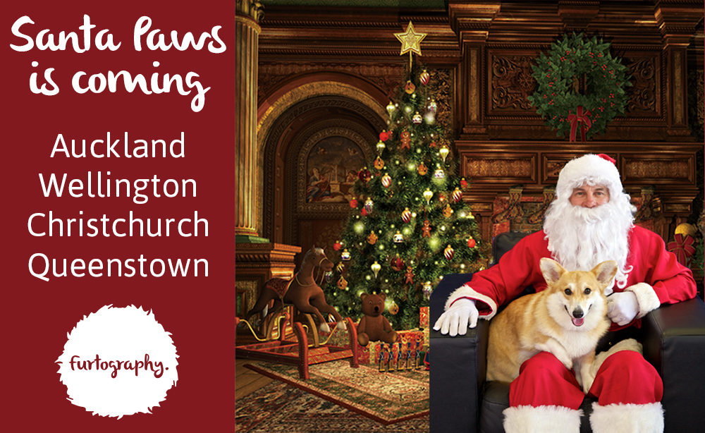 Santa Paws is coming New Zealand