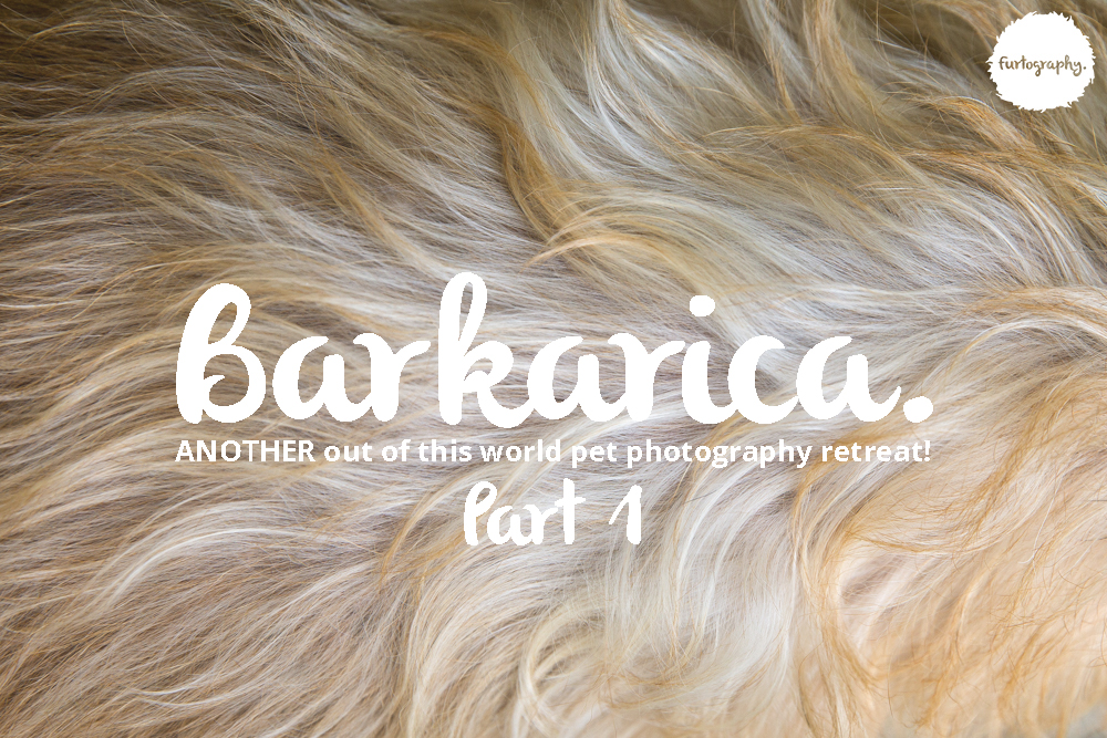 Barkarica | Furtography goes to Costa Rica Part 1