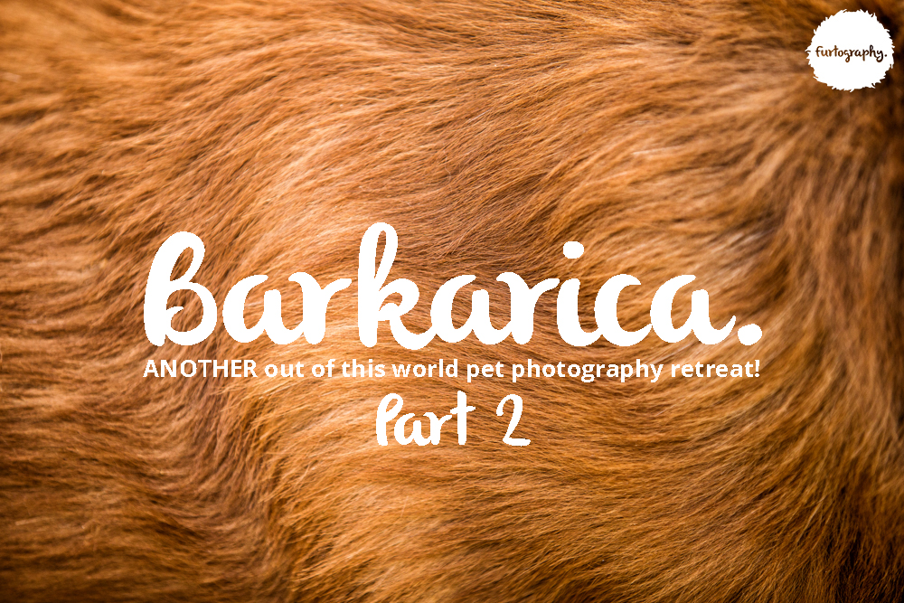 Barkarica | Furtography goes to Costa Rica Part 2