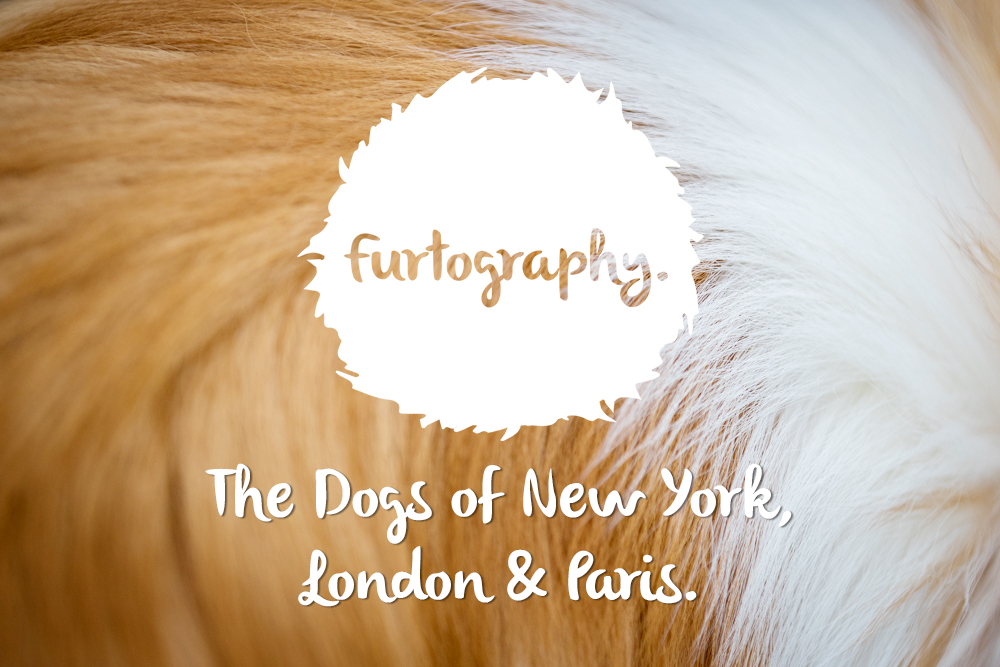 New York, London, Paris. Photographing Dogs Overseas.