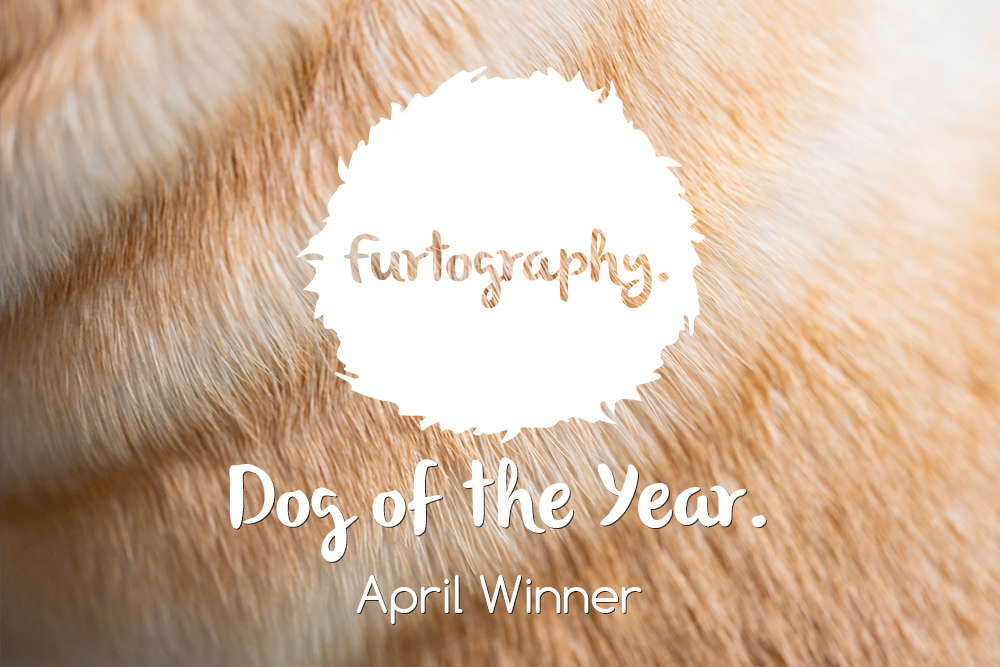 Dog of the Year – April Winner