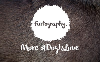 More #DogIsLove goodness.