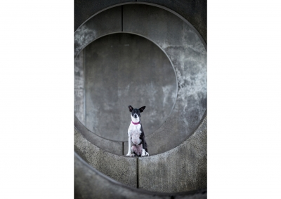 03-WInners-Circle-Sessions-urban-collie-concrete
