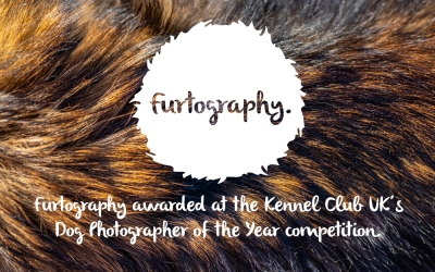 Furtography Wins Prize at the Dog Photographer of the Year Awards.
