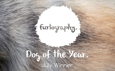 Furtography Dog of the Year – July Winner