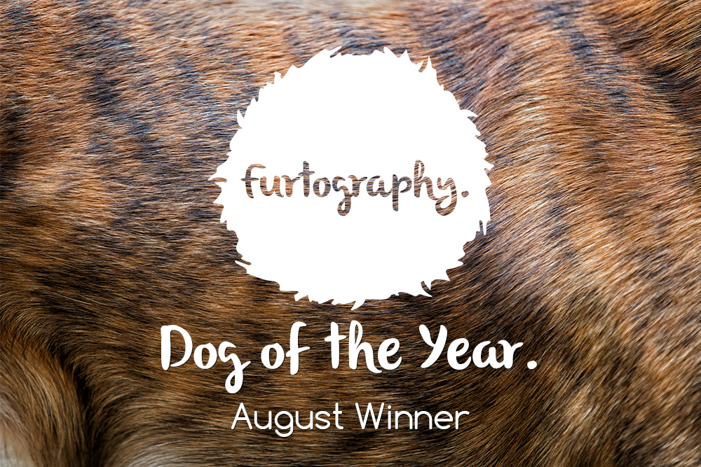 Dog of the Year – August Winner