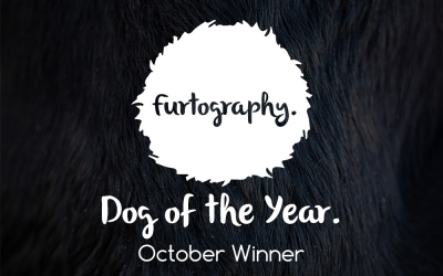 Dog of the Year – October Winner