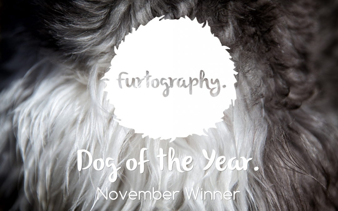 Dog of the Year – November Winner