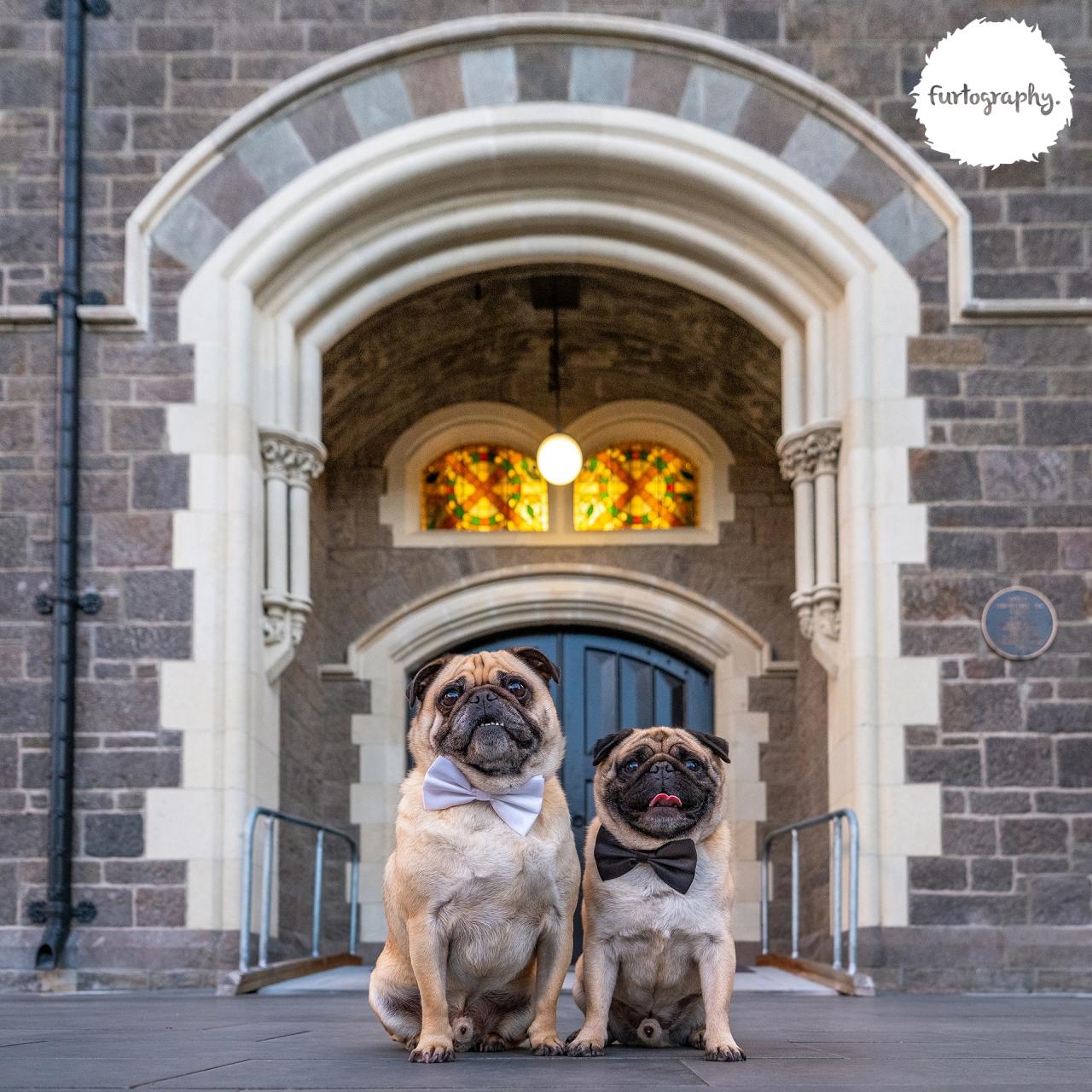 Barnaby & Louie