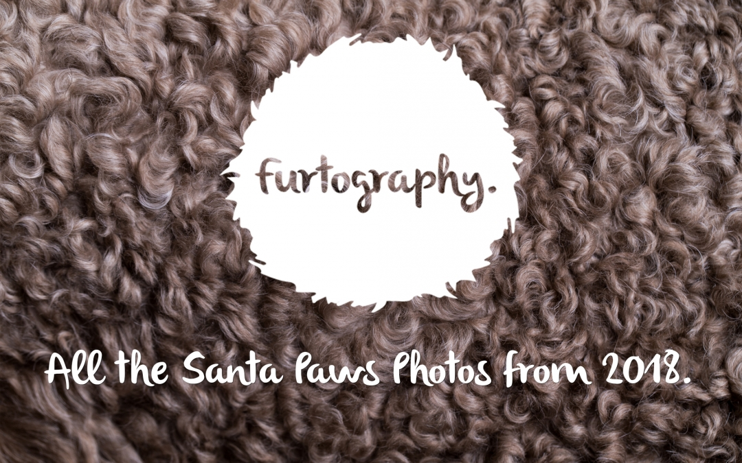 Santa Paws Photos 2018