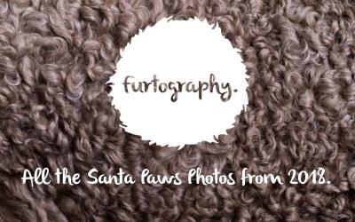Santa Paws Photos 2018