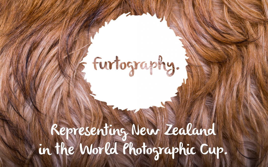 Representing New Zealand in the World Photographic Cup! | Dog Photography NZ