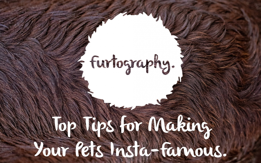 Furtography's Top Tips for Making Your Pet Insta-Famous