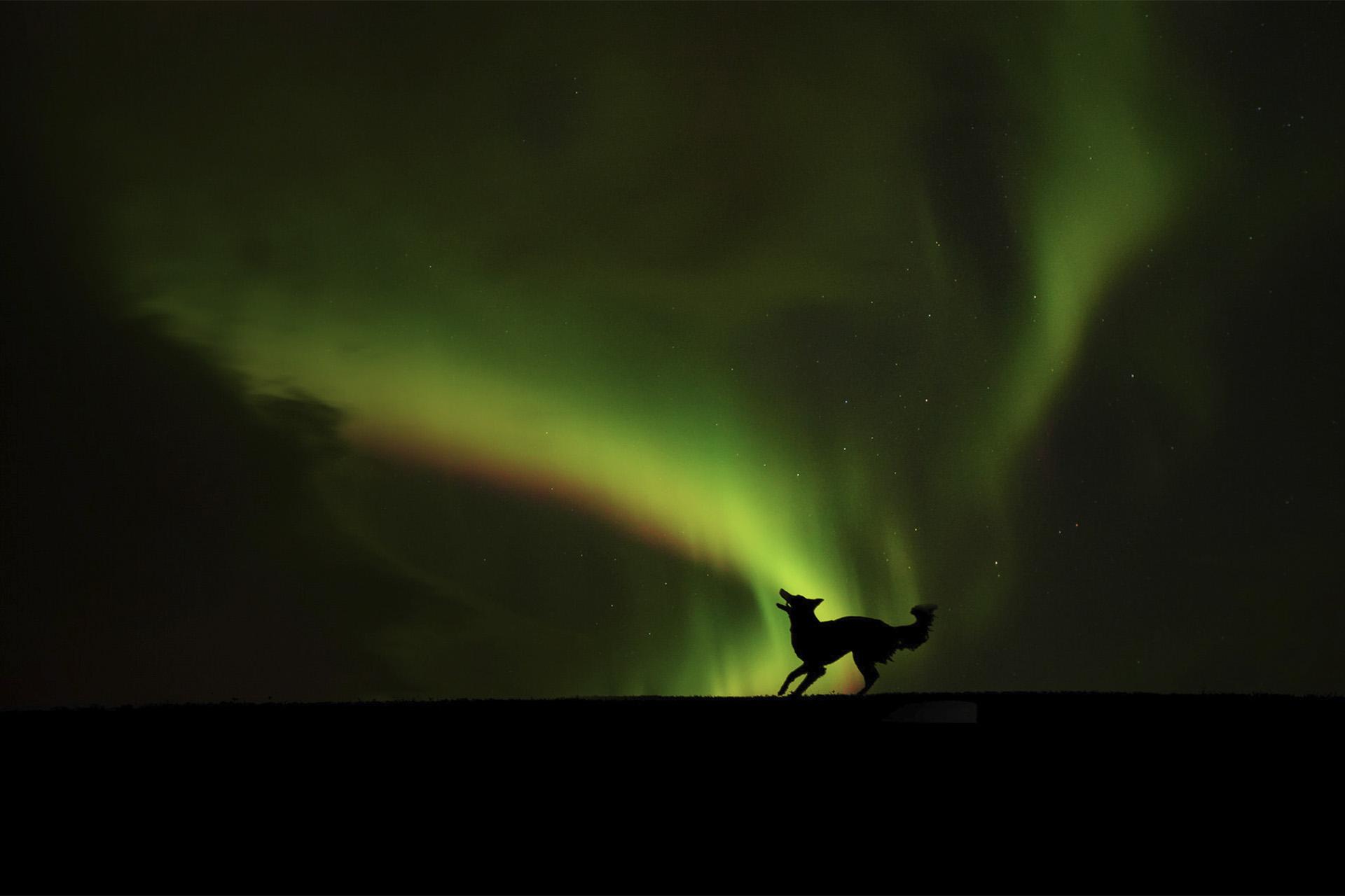 Dog_aurora_silhouette