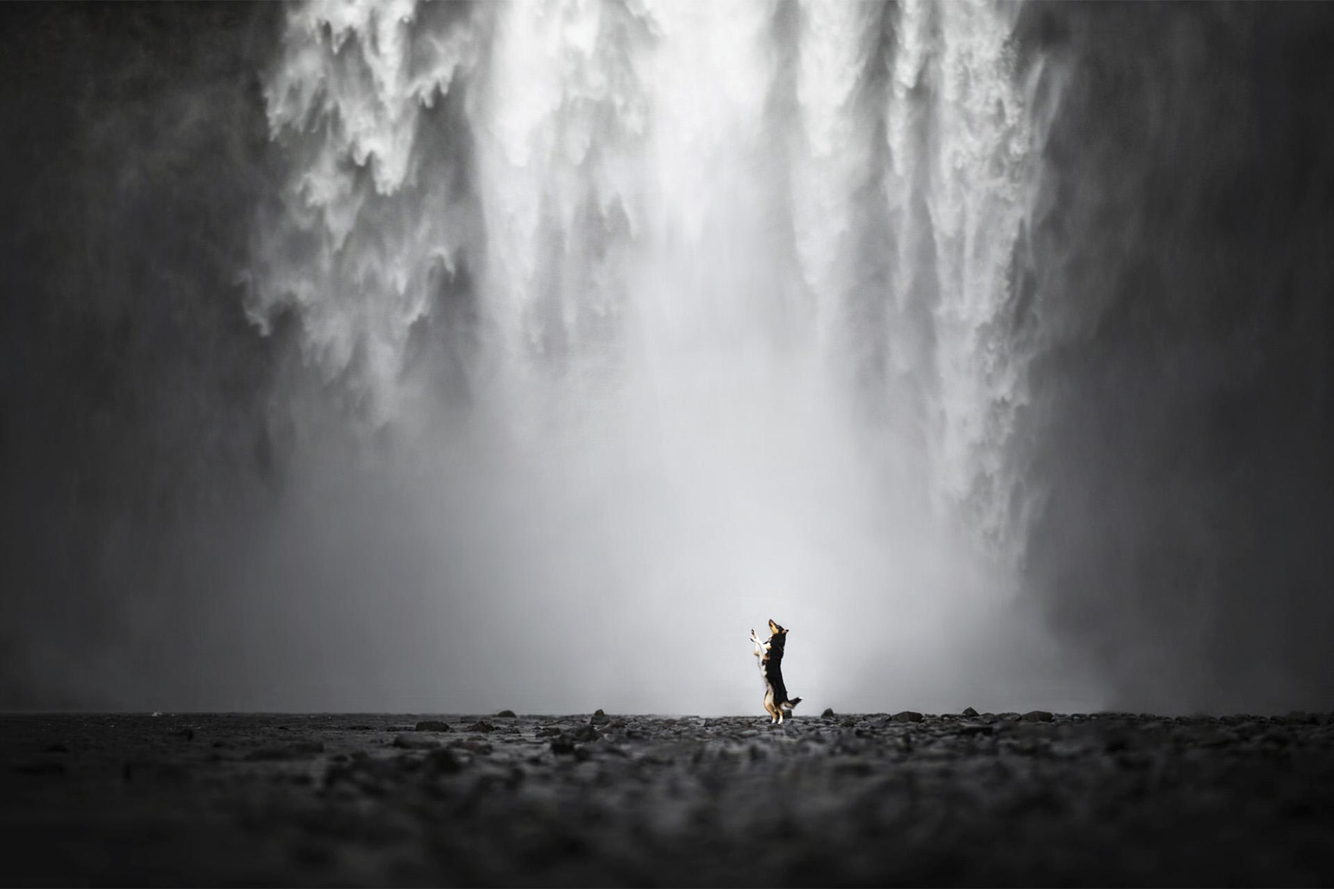 Dog_waterfall