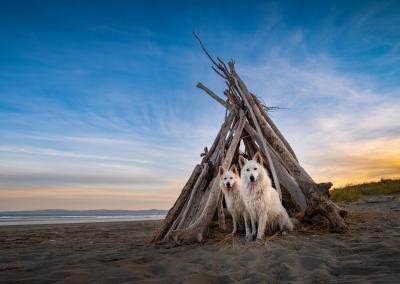 Flynn_indi_white swiss shepherd_beach teepee