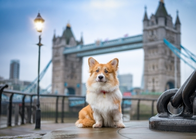 Ginger_corgi_tower Bridge_london