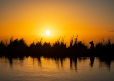 Munroe_sunset_silhouette_reflection_pitbull