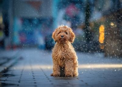 Spencer_urban_city_town_rain