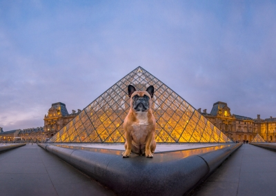 Tallulah_french bulldog_louvre_paris