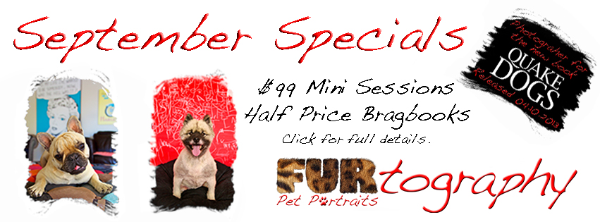 September Specials | Christchurch Pet Photography