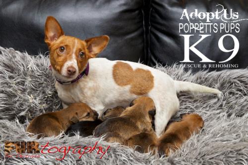 PoppettsPupppies_K9 001