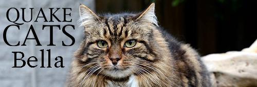 Quake Cats Exclusive: Bella