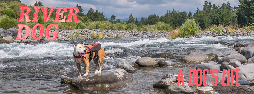 The River Dog – A Dog's Life