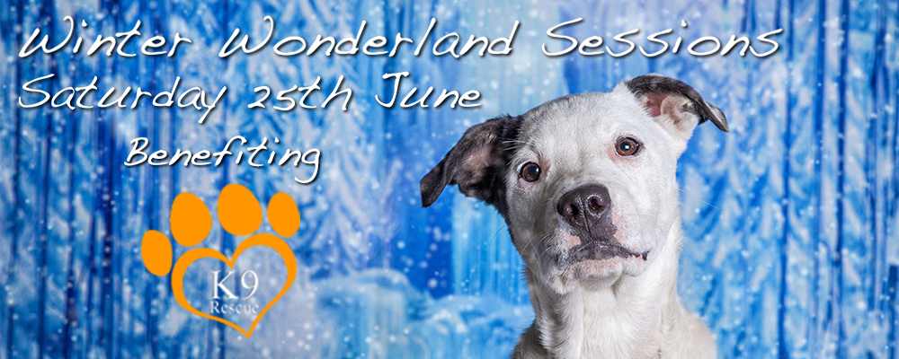 Winter Wonderland Fundraising Sessions | Canterbury Pet Photography