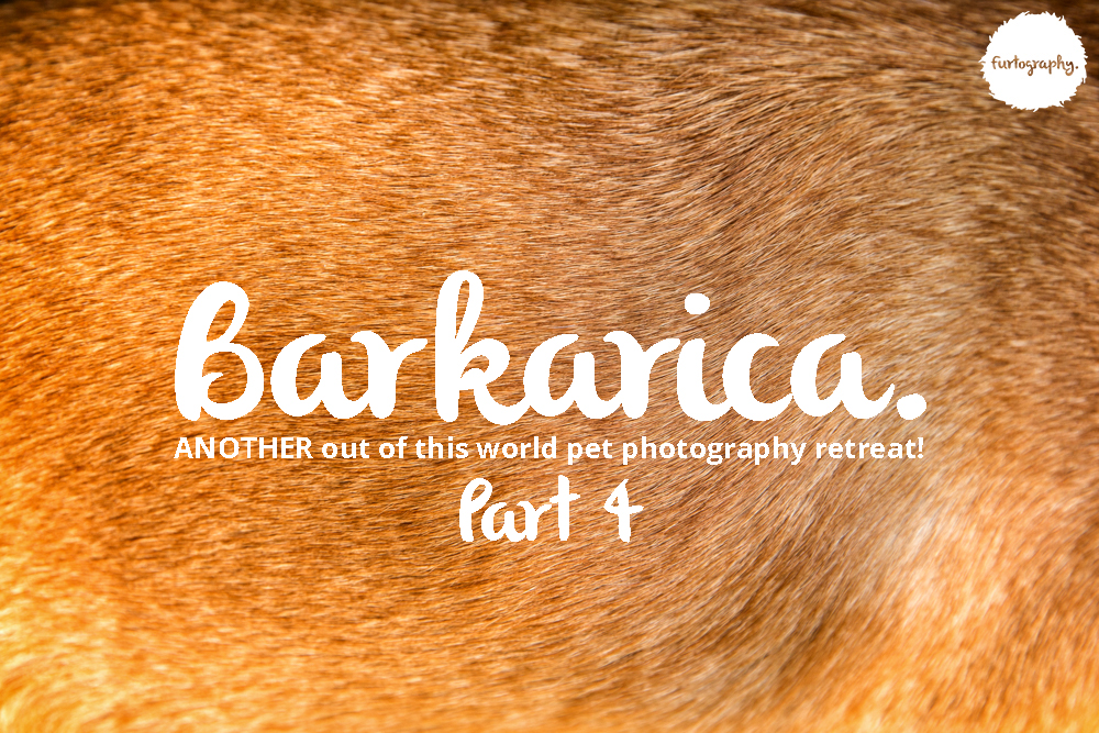 Barkarica | Furtography goes to Costa Rica Part 4