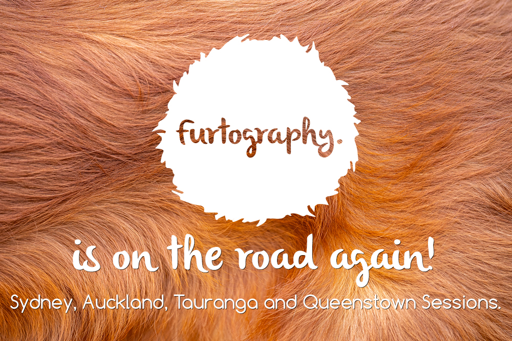 Furtography is on the road again…