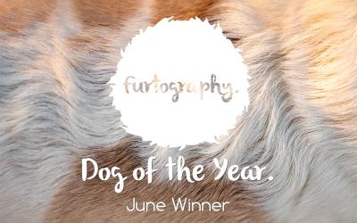 Dog of the Year winner – June
