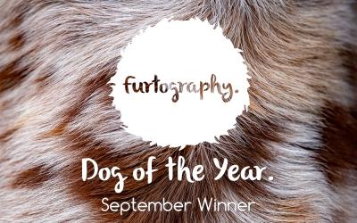 Dog of the Year – September Winner