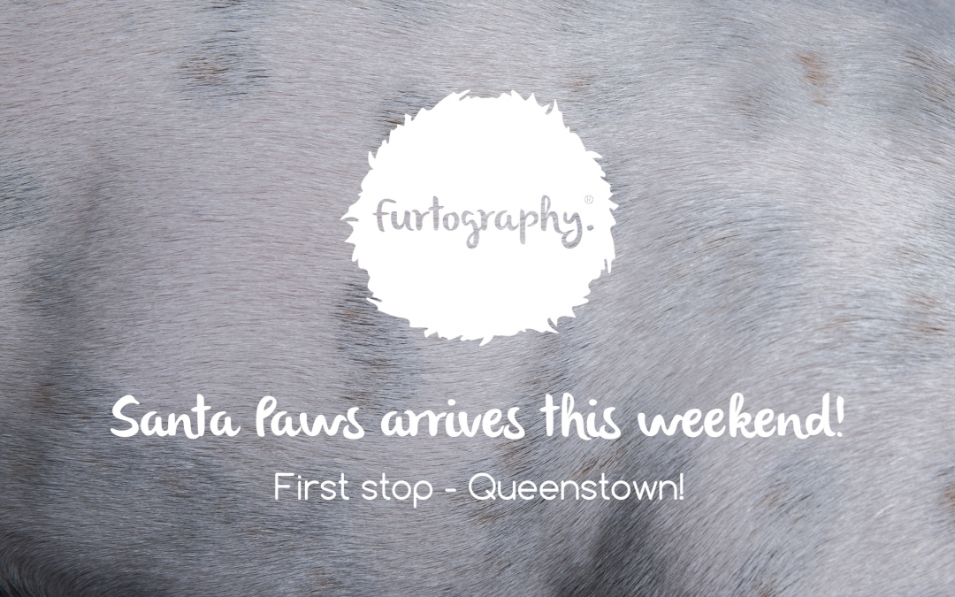Santa Paws Arrives This Weekend | Queenstown Dog Photography