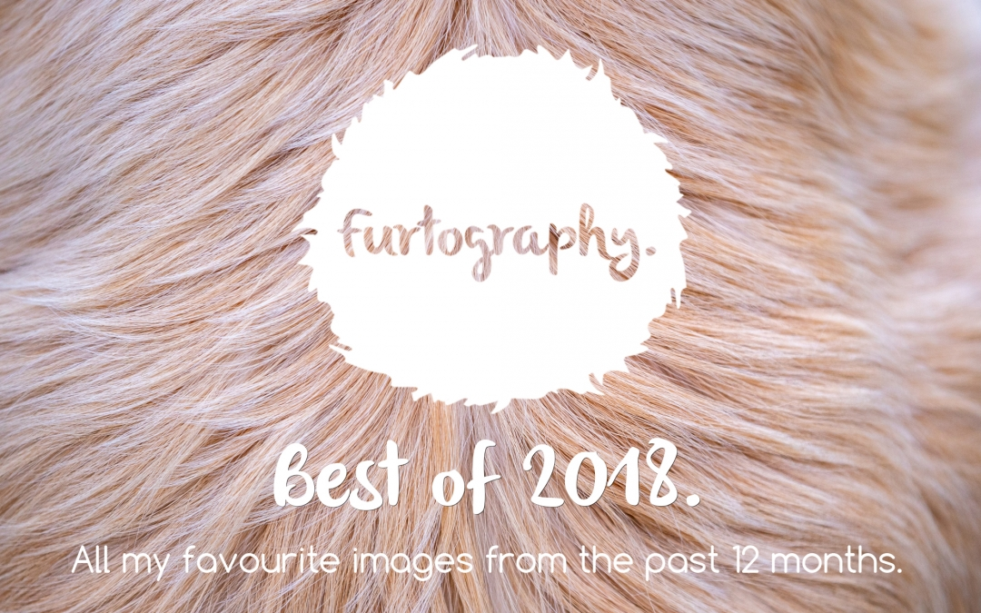 The Best of 2018 | Pet Photography in New Zealand and Beyond!