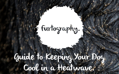 The Furtography Guide to Keeping Your Dog cool in a Heatwave