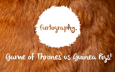 Game of Thrones, Guinea Pig Style!