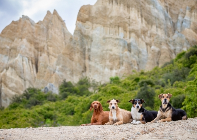 Chance_Flick_Jawa_Lucy_viszla_huntaway_mixed breed_clay cliffs omarama