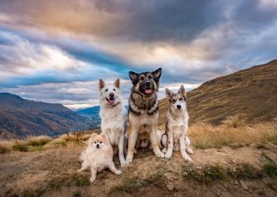 Enzo_Milo_Nico_Theo_pomeranian_white shepherd_german_husky cross_mountains