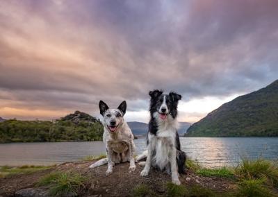 Fluke_Truce_cattle dog_border collie_lake_sunrise