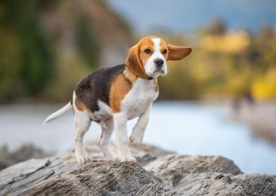 Wallace_Beagle_river