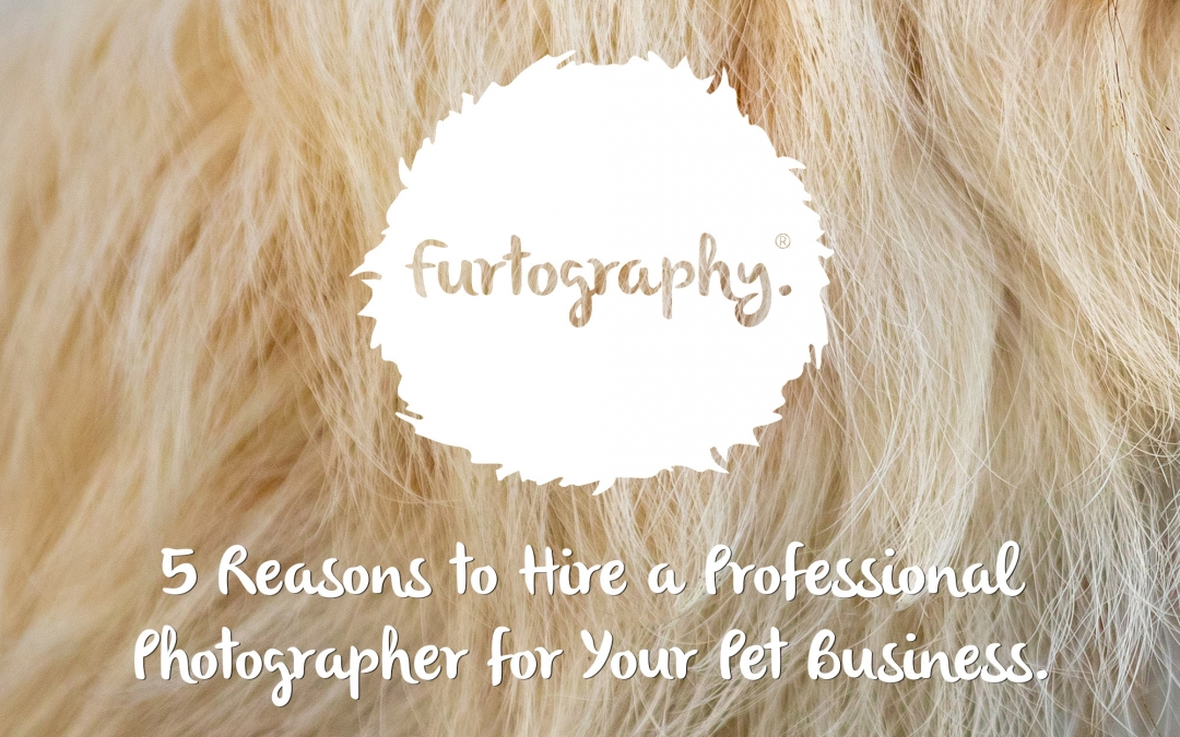 5 Reasons to Hire a Professional Photographer for Your Pet Business